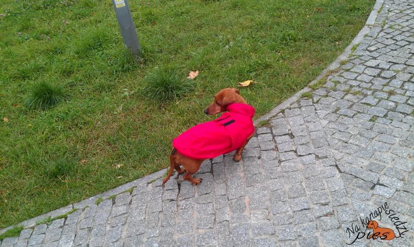 Mały, czerwony pancernik.