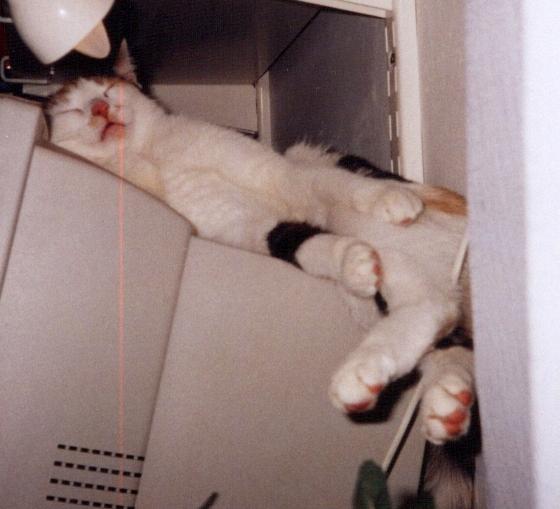 Ale spaniem na monitorze z nikim się nie podzielę.