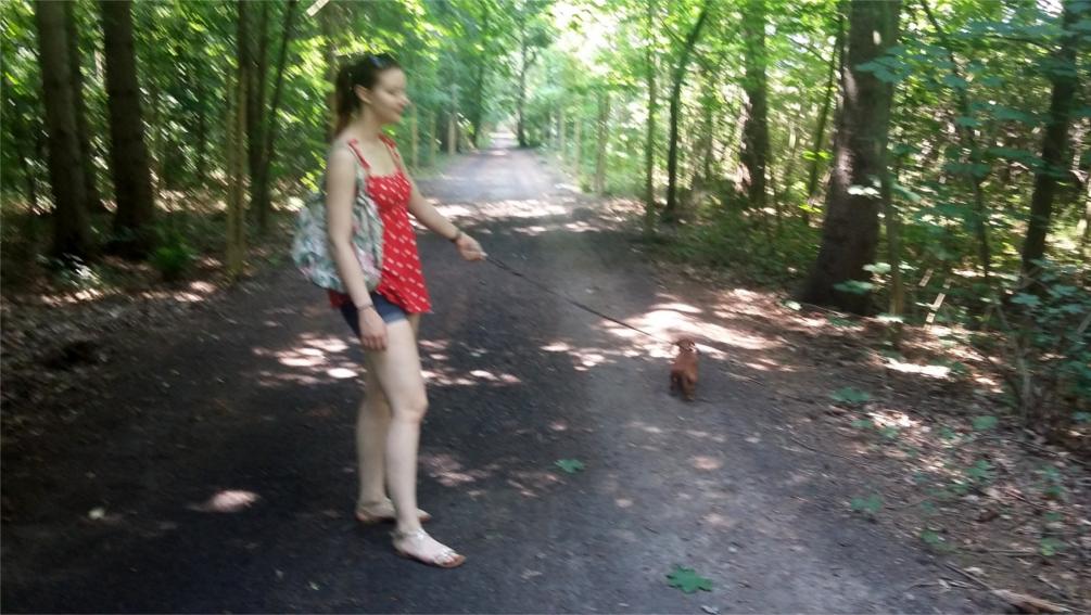 Do jeziora dojdziemy lasem. ;)