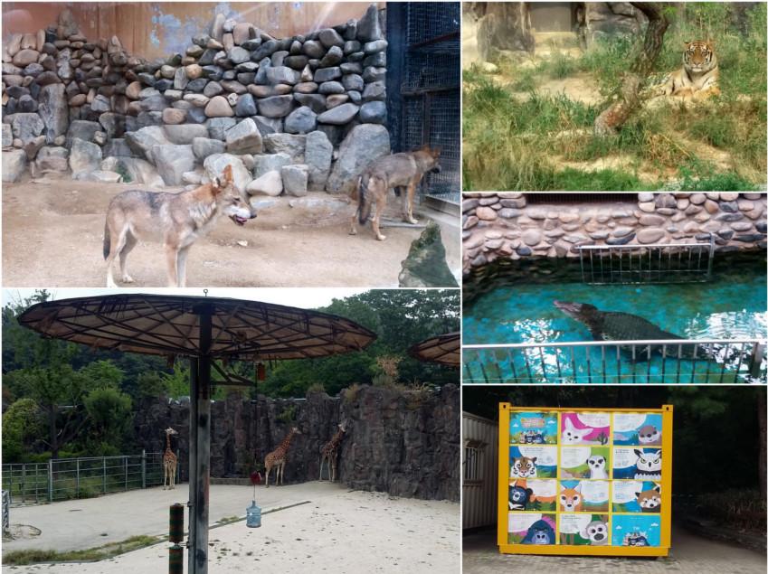 zoo, pies, na kanapie, siedzi