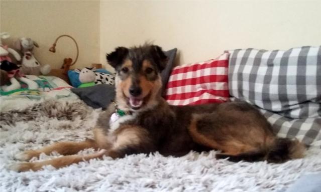 schroniska, pies, na kanapie, siedzi