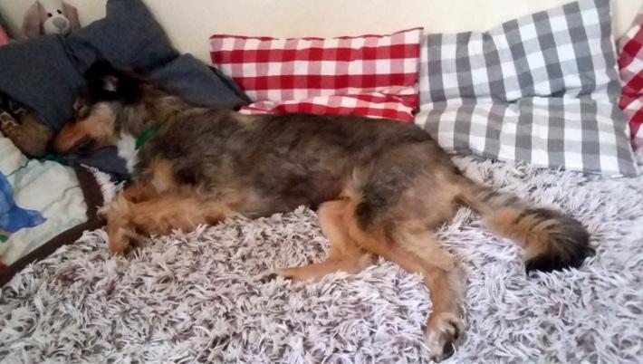 adopcja, pies, psy, adopcje, informacje, pomoc, na kanapie, siedzi