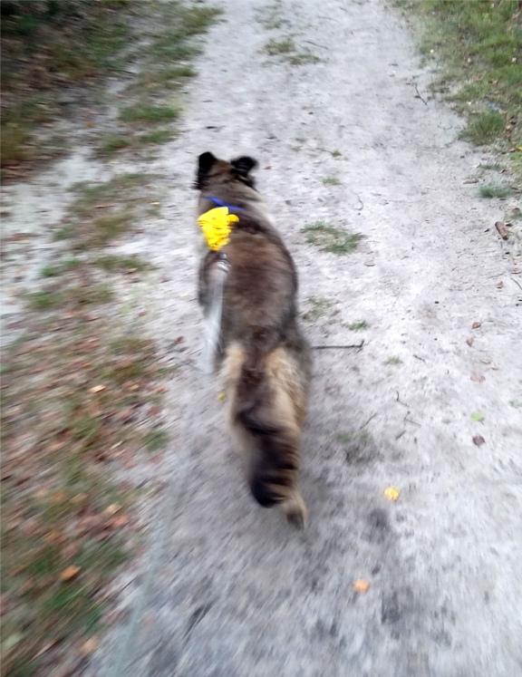 szła, pies, psy, na knaapie, freya, bieg po lesie, międzylesia, piesia