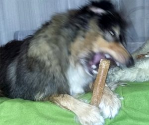churpi, pies, psy, recenzja, dog