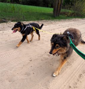 pies, psy, dog, mazowieckie, las