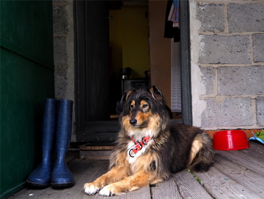 dobre relacje, pies, psy, dog