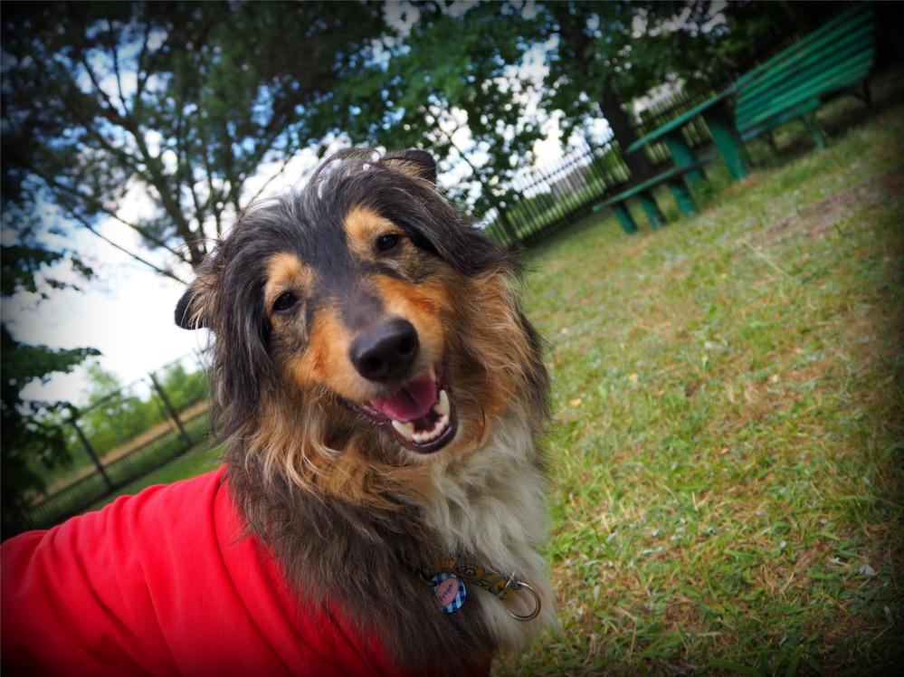 pierwszy rok razem, pies, psy, Freya