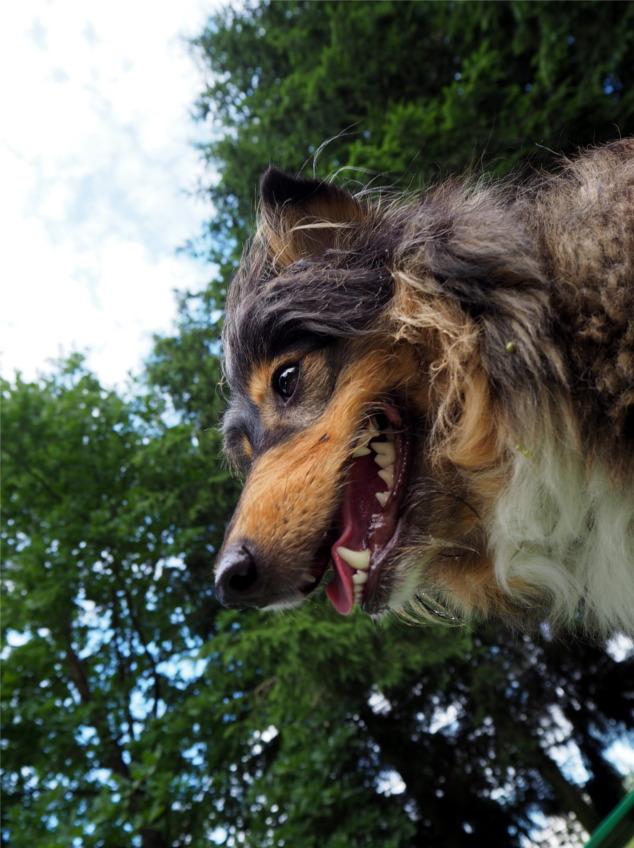 pokonać lęki, pies, psy, lękowy pies