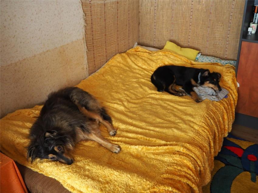 z psem na działkę, pies, psy