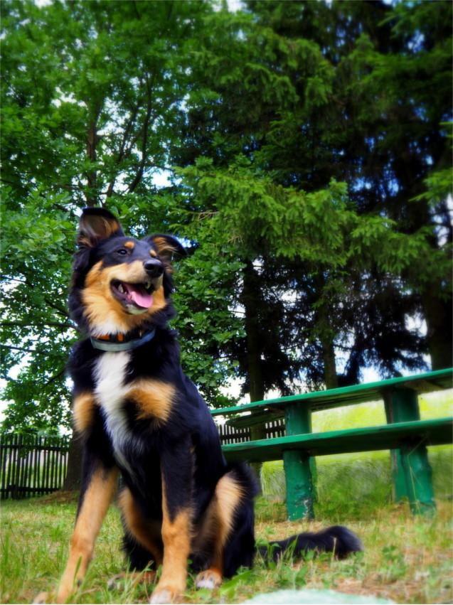 4 lata, pies, psy, blog, konkurs
