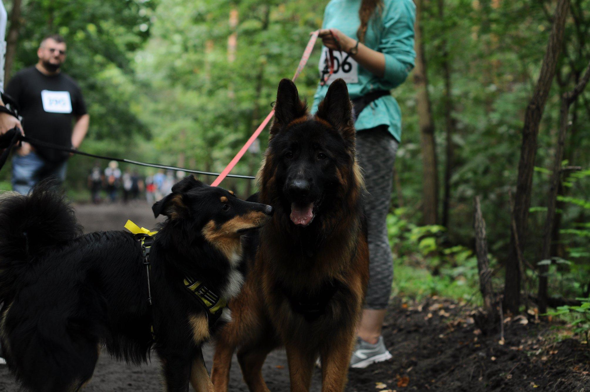 Międzylesia, pies, psy, event, wydarzenie, impreza