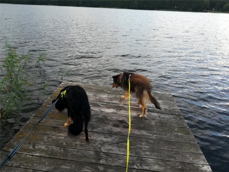 na Mazury, pies, psy, urlop z psem, wakacje z psem, Mazury z psem, na Mazury z psem