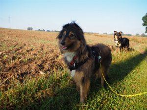 na Mazury, pies, psy, wakacje z psem, urlop z psem, Mazury z psem,