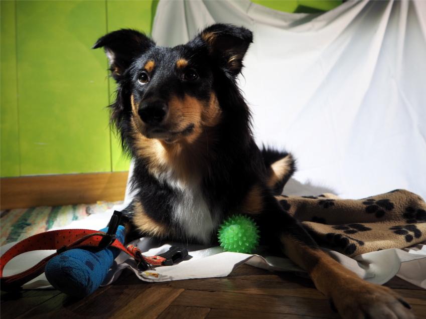 zbiórka dla Gaju, zbiórka rzeczy, pies, psy, Schronisko w Gaju