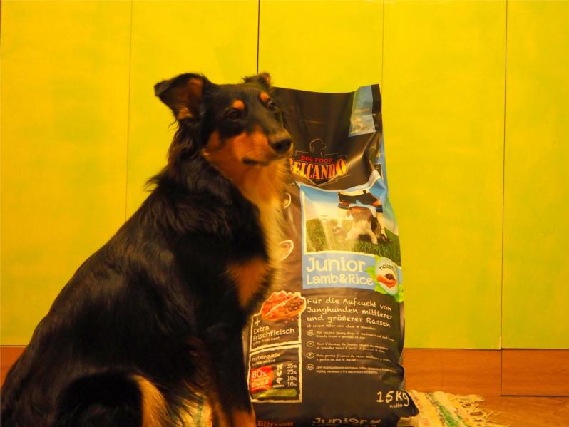 belcando, lamb&rice, lamb, rice, karma dla psa, test, testy, recenzja, pies, psy