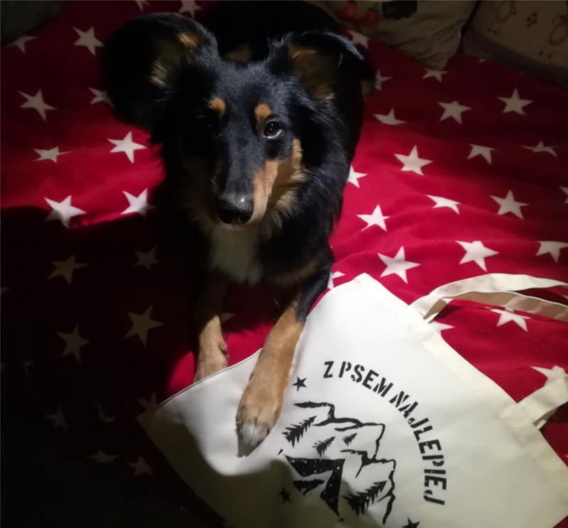 Lisia Nora, recenzja, akcesoria dla psiarza, pies, psy