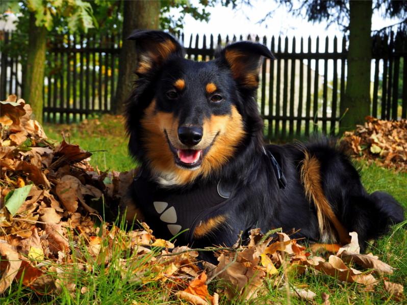 problemy w wychowaniu psa, problemowy pies, psy, pies, wychowanie psa,