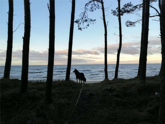 wyjazd Sylwestrowy, wyjazd z psem, wakacje z psem, morze z psem, Jantar,