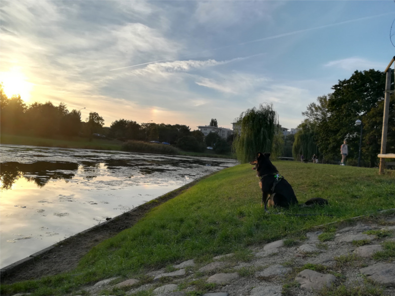 spacerowe w Warszawie, pies, psy, spacer z psem, czas z psem