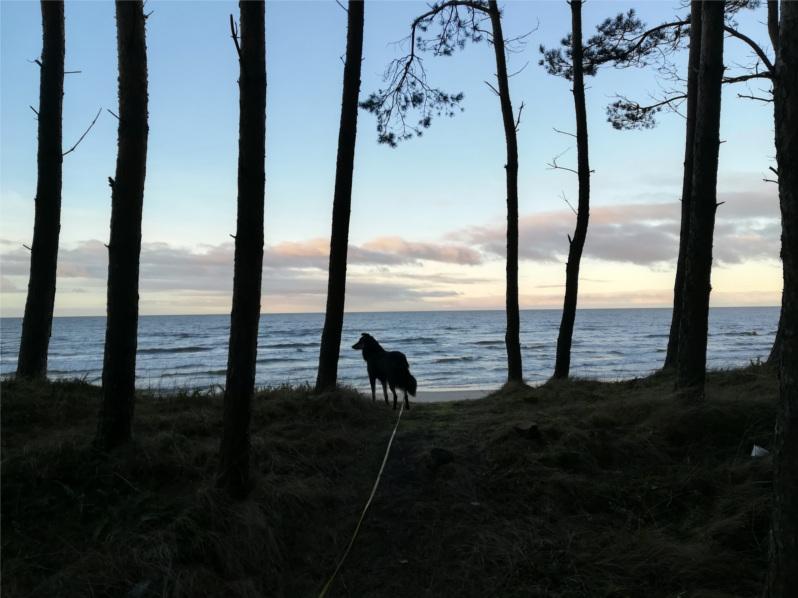 wyjazd Sylwestrowy, wyjazd z psem, wakacje z psem, morze z psem, Jantar, Stegna