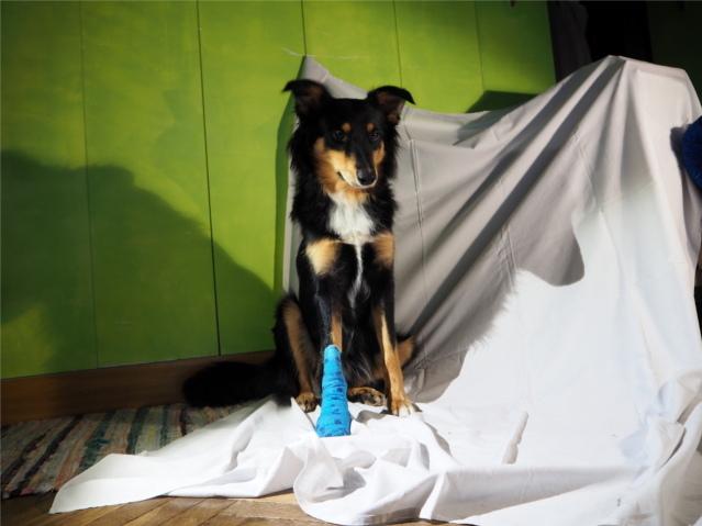 tasiemiec, tasiemce, zdrowie psa, zdrowy pies, choroby psów, pasożyty