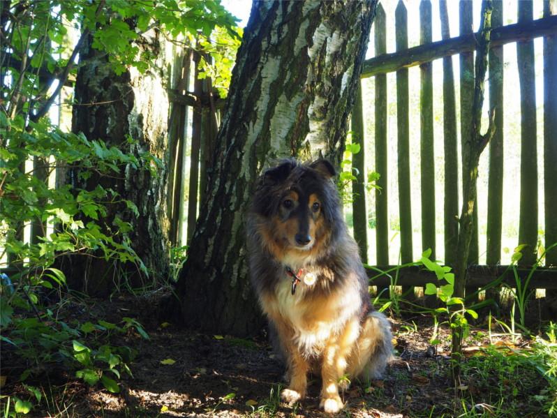 nauczyła mnie, pies, psy, mądry pies, życie z psem, szkolenie psa
