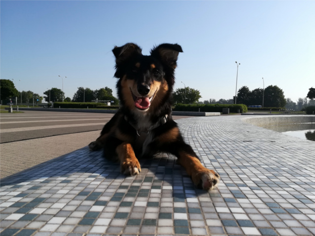 rok od adopcji, pies, psy, adopcja psa, adopcja, życie z adopciakiem,