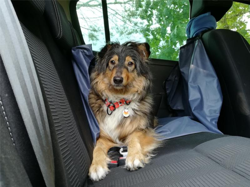 przewóz psów i kotów, transport psa, transport kota, podróż z psem, podróż z kotem, wyjazd z psem, wyjazd z kotem, pies w aucie, pies w samochodzie