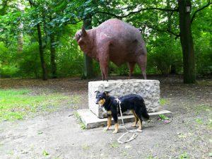 znaleźć perłę w trawie, #perławtrawie, wycieczka, znajdź na mapie, przygoda, spacer z psem