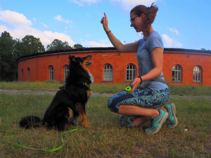 kliker, pomoce treningowe, pies, psy, trening z psem, wychowanie psa, szkolenie psa