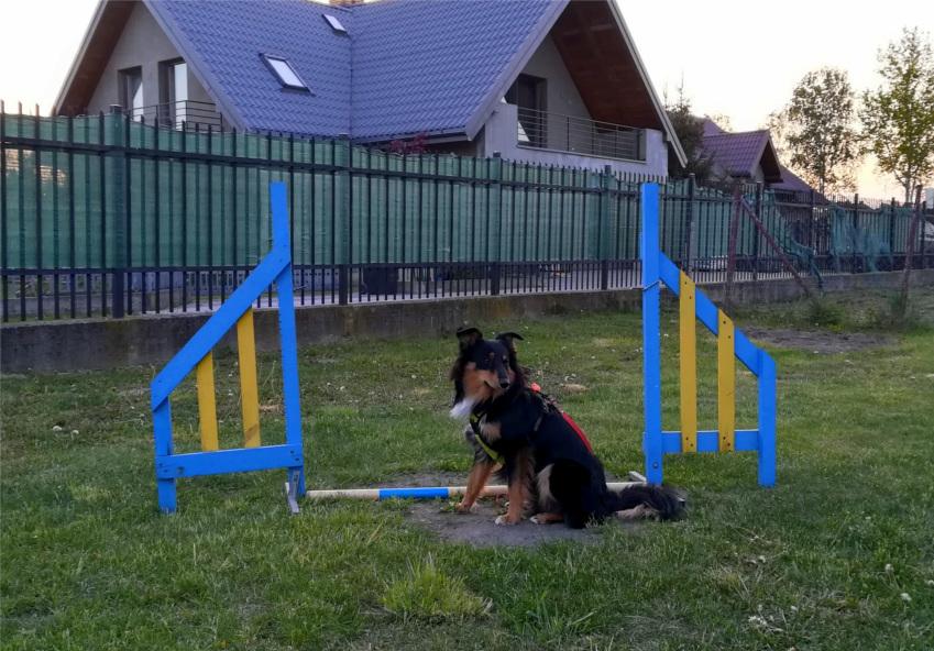 pregility, agility, psi sport, trening z psem, szkolenie psa