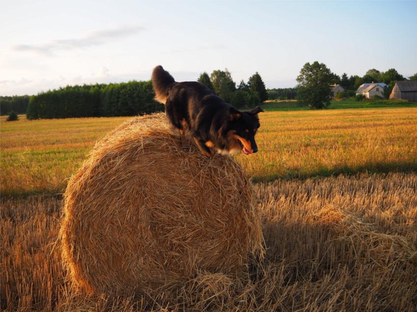 hymn pochwalny dla Iggy'ego, mój pies, ja i mój pies, zycie z kundelkiem