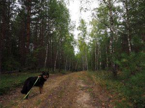 łajs, wyjazd z psem, wakacje z psem, warmińsko-mazurskie