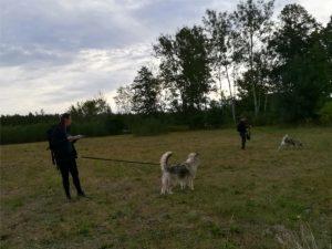dogtrekking w Puszczy Bolimowskiej, dogtrekking, czas z psem, Puszcza Bolimowska, Mazowiecka Liga Dogtrekkingu