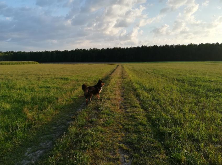 druga strona sielskich obrazków, życie na wsi, wieś, krowa, koń, pies, zwierzęta gospodarskie