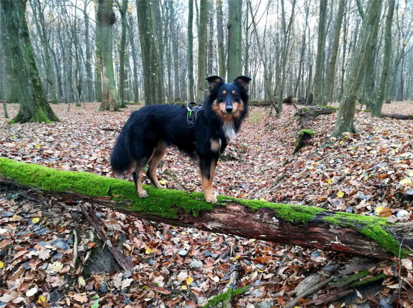 dzień pełen przygód, pies w lesie, Rezerwat Dębina, na spacer z psem, mazowieckie, na spacer do lasu