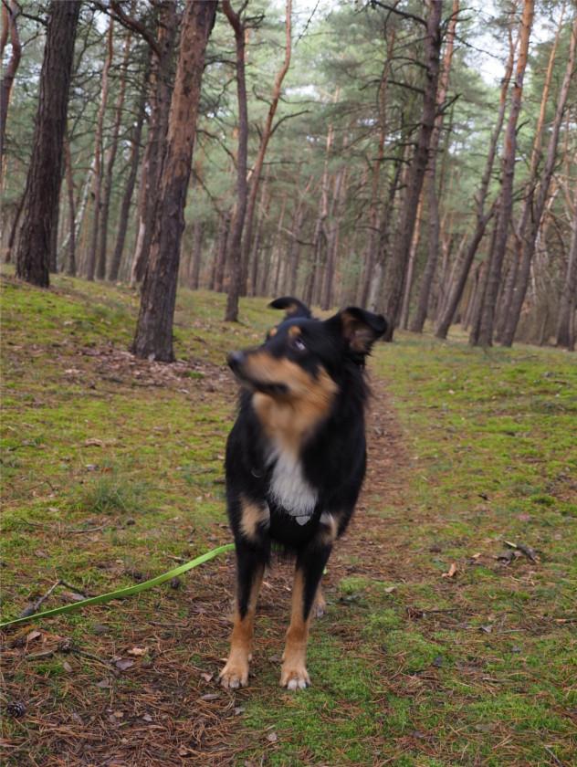 psi model, psie zdjęcia, zdjęcia psa, fotografia