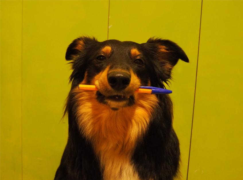 wiedzę o psach, zoopsychologia, behawiorystyka, wykłady