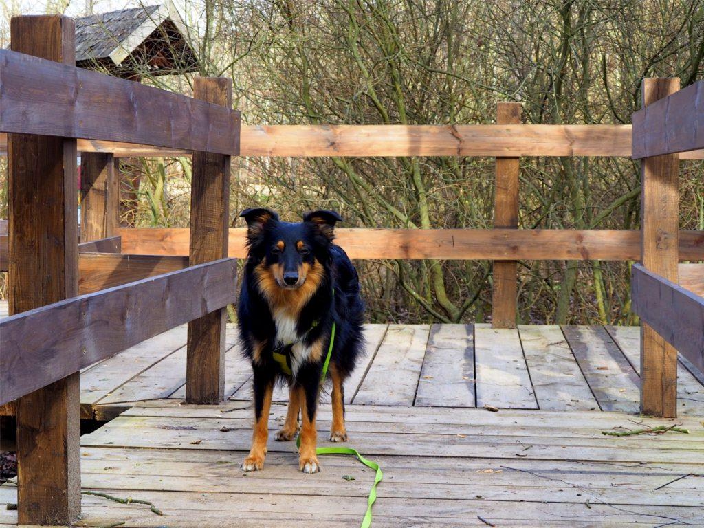 Rezerwat Dębina, rezerwat przyrody, rezerwat przyrody mazowsze, Rezerwat Przyrody Dębina, Klembów, w Ostrówku, Ostrówek, spacer z psem, na spacer z psem,