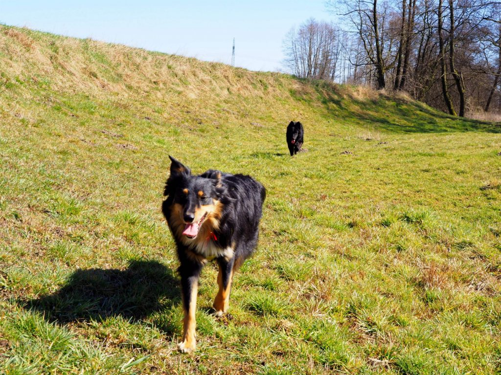 zakaz wstępu, zakaz wstępu do lasu, na spacer z psem, gdzie z psem, koronawirus, pandemia koronawirusa