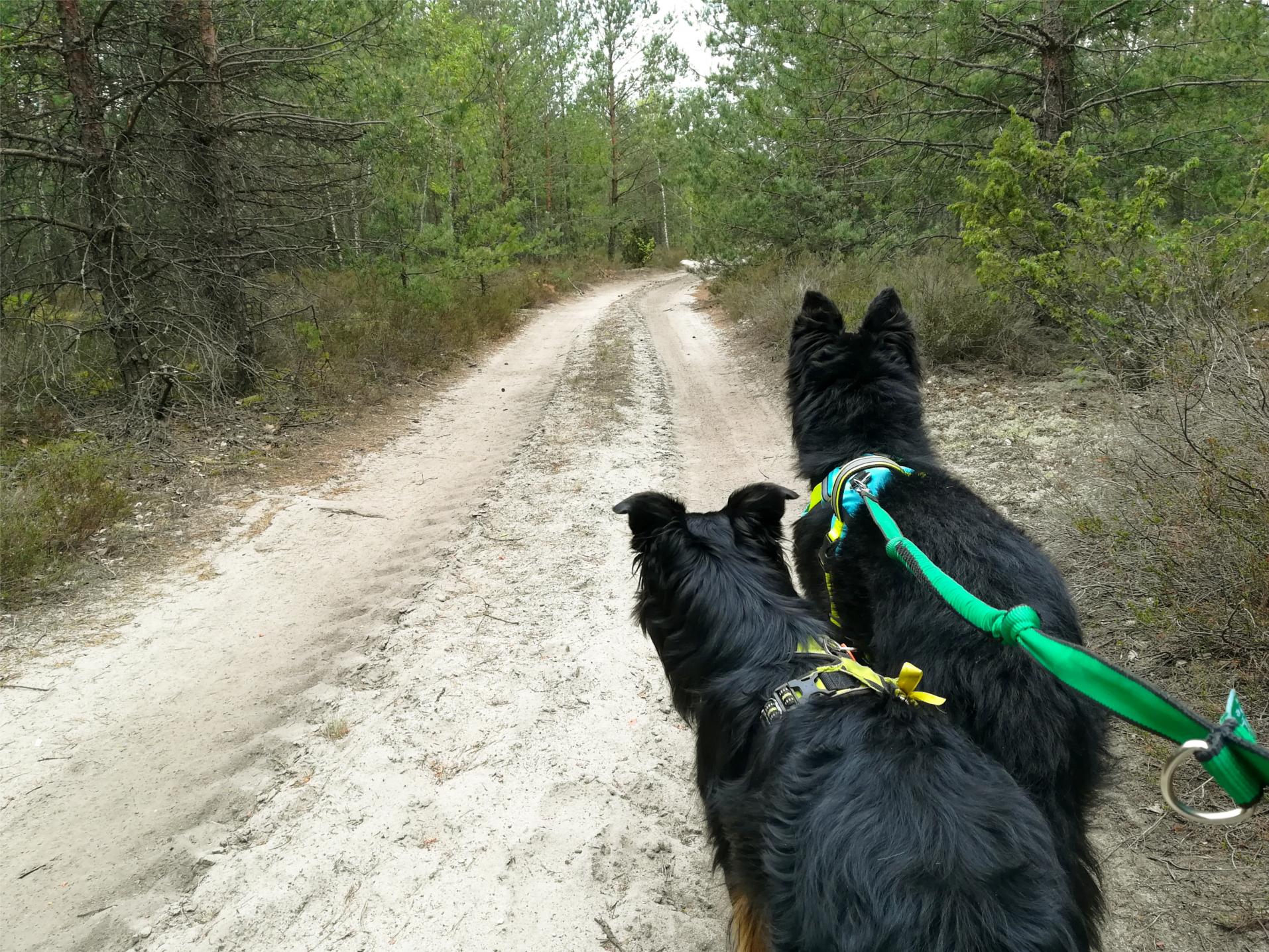 dogtrekking, samotny wilk, wędrówki z psem, relacja