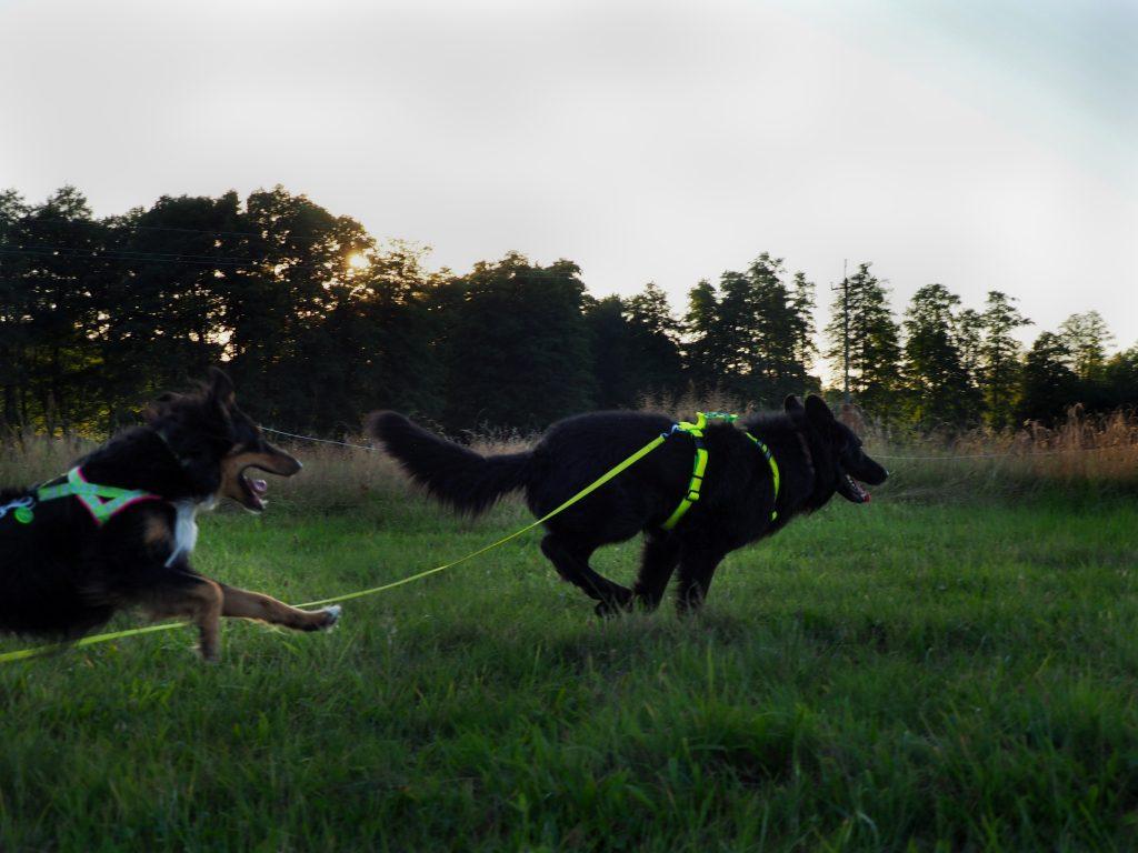 drugi pies, problemy behawiorlane, psy lękowe, psy agresywne, problemy z psem