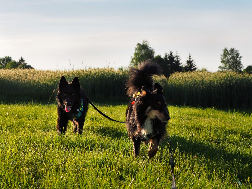 na spacerach, spacer z psem, trening z psem, behawiorysta, życie z psem
