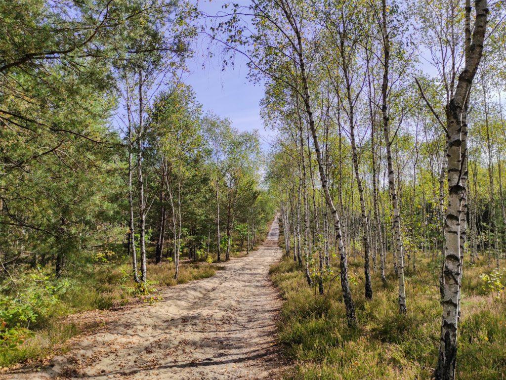 zabierz PIESia, zabierz piesia do Międzylesia, edycja on-line, Mazowiecki Park Krajobrazowy