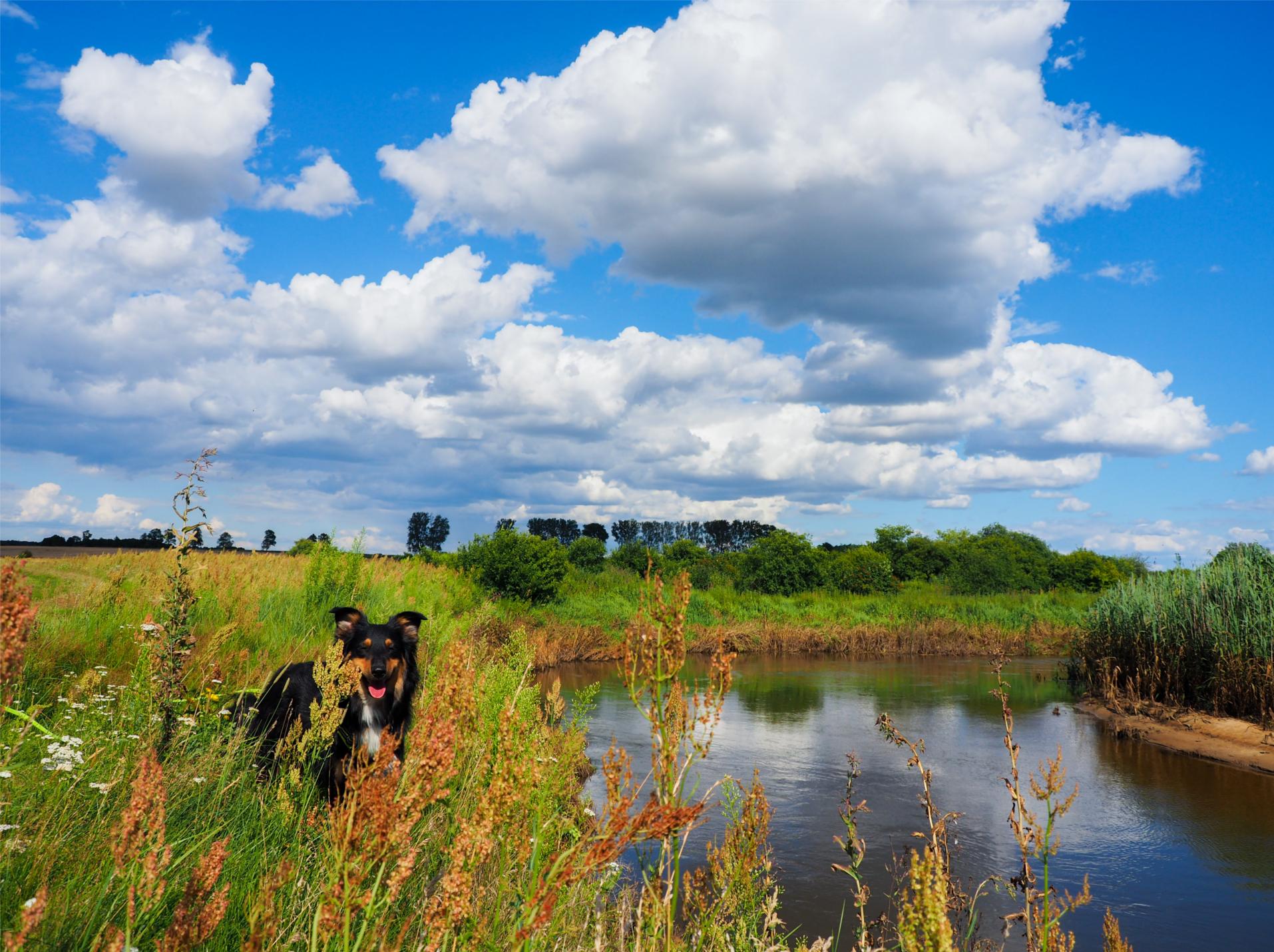 Liwiec, Liw, rzeka Liwiec, Mazowsze, urlop z psem, wakacje z psem, nieznane Mazowsze, odkryj Mazowsze