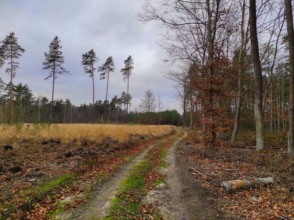 Bolimowski Park Krajobrazowy, Kampinos z psem, dogtrekking, dogtrekking mikołajkowy, mikołajki, aktywne mikołajki