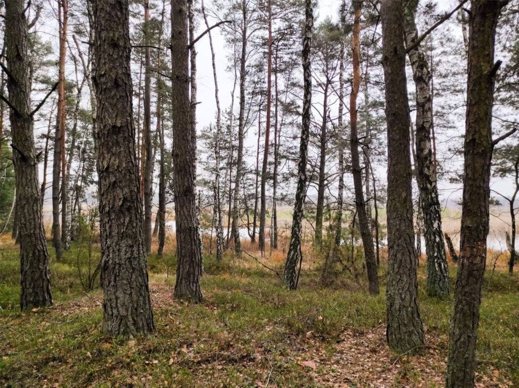 Mińsk Mazowiecki, Rezerwat Przyrody Bagno Pogorzel