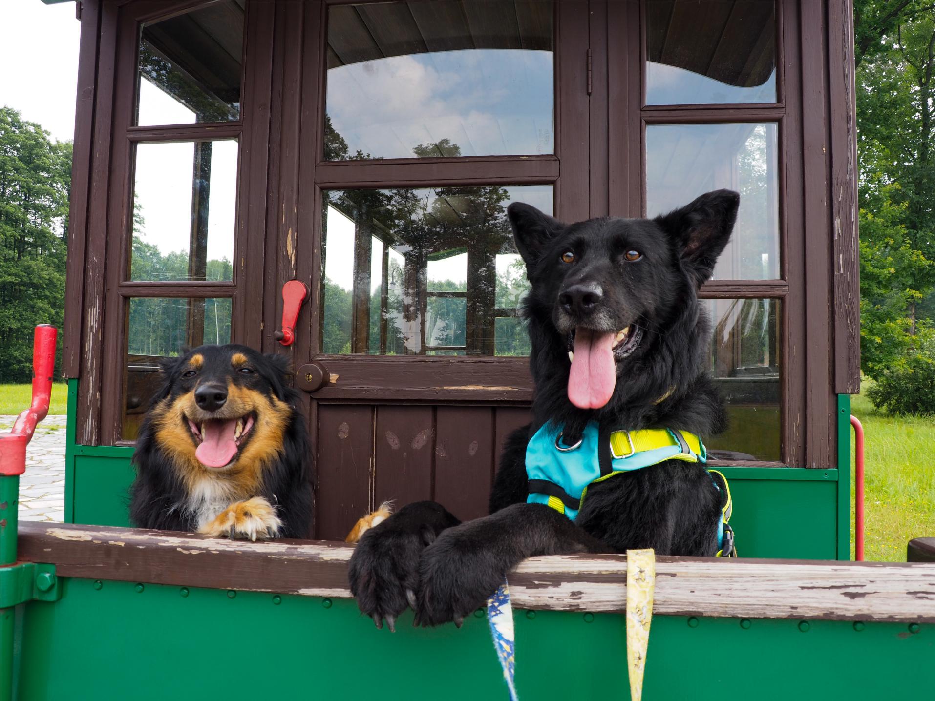 wyjazd z psem, mazowsze, urlop na mazowszu, urlop z psem, poza miastem, Mrozy, tramwaj konny